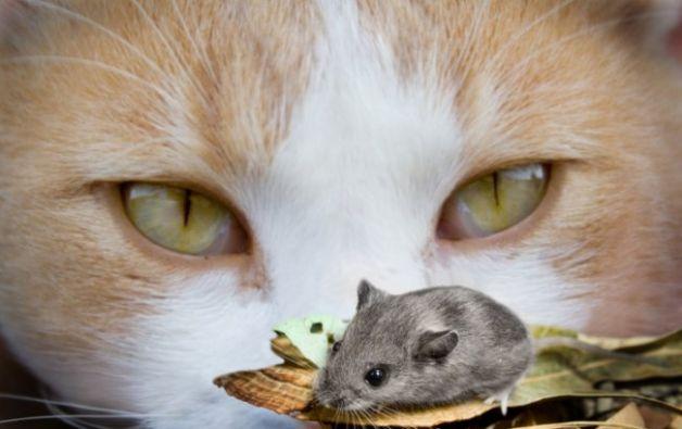 La gatta e Afrodite - Esopo