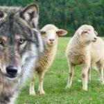Il lupo e l'agnello - Esopo