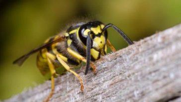 La vespa e la formica - favola africana