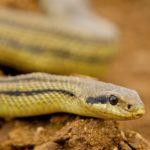 Il contadino e il serpente che gli aveva ucciso il figlio - Esopo