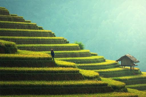 Il-contadino-saggio-racconto-cinese