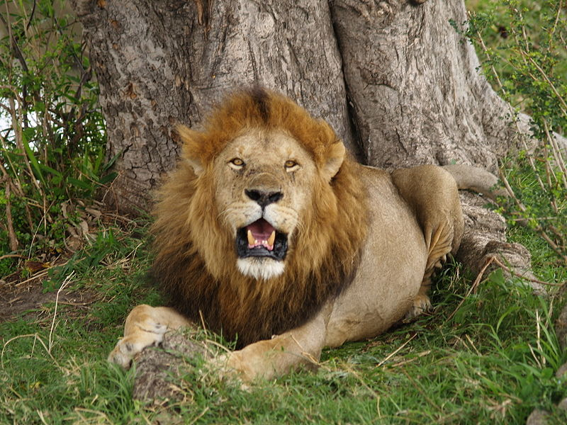 Il-leone-e-la-lepre-Esopo