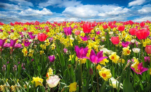 Il-linguaggio-dei-fiori
