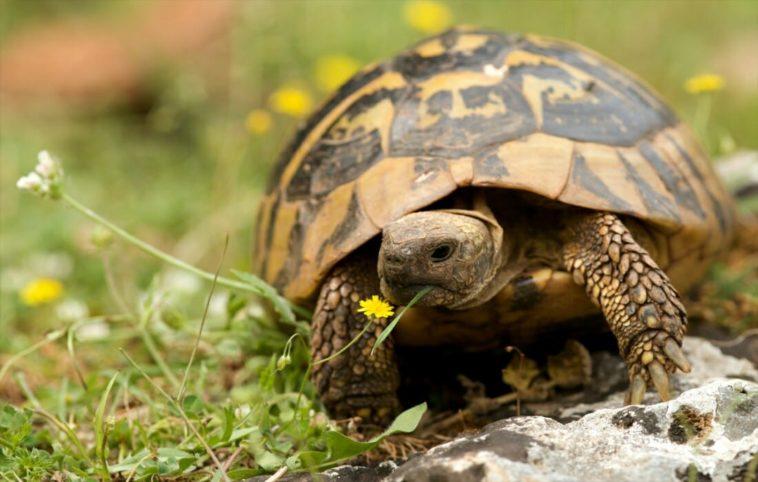 La-tartaruga-e-la-lepre-Esopo