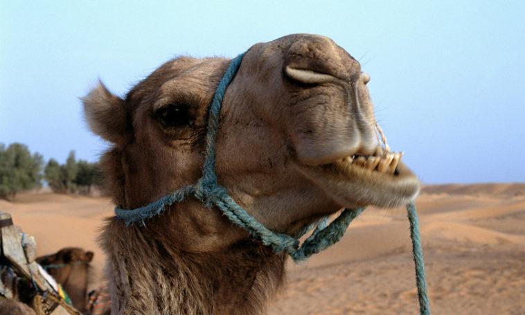 Il-cammello-e-Zeus-Esopo-favole