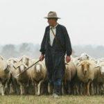 Il-lupo-e-il-pastore-Esopo-favole