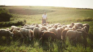 Il-pastore-che scherzava-Esopo-favole