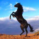 Il-cinghiale-il-cavallo-e-il-cacciatore-Esopo-favole