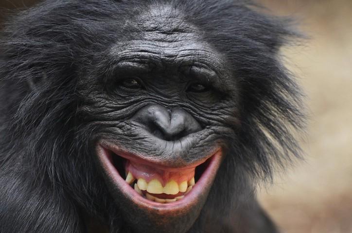 La-scimmia-e-i-pescatori-Esopo-favole